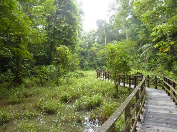 Cantarrana (singing frog) swamp, La Selva, Costa Rica