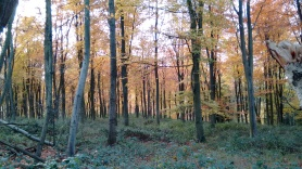 Studying cognition in wild songbirds in the famous Wytham Woods