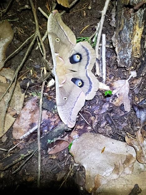 Moth, Stillwater, OK